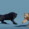 پکیج Big Cats Bundle (3 pcs)