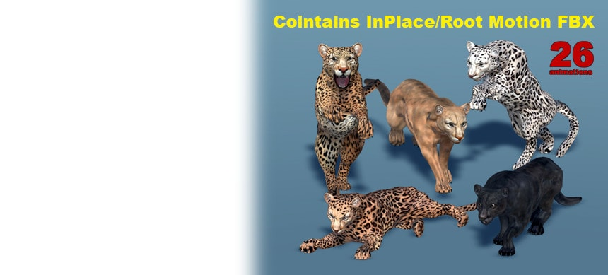 پکیج Big Cats Bundle (3 pcs)